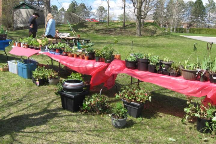 Plant sale tables