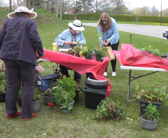 Plant sale table with customer
