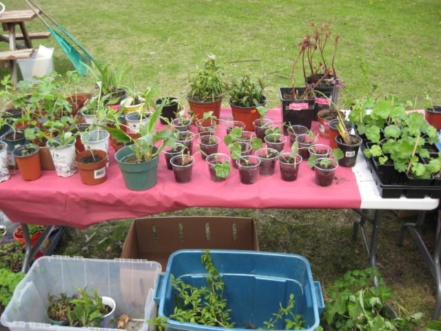 Plant Sale Plants